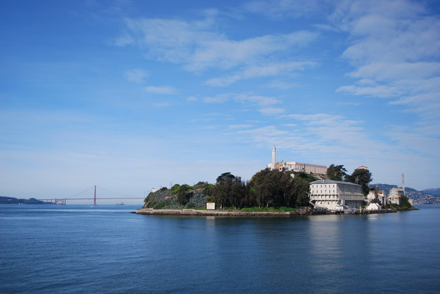 Seeing plants on Alcatraz catches visitors by surprise. Photo by Shelagh Fritz