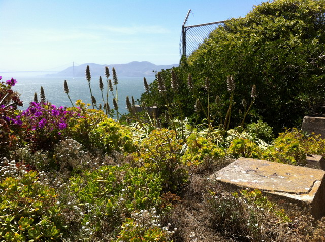 Acanthus, succulents and pelargoniums now grow where the guard tower once stood. Photo by Shelagh Fritz