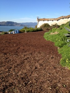 The finished cardboard and mulch layer. Photo by Sarah Mendel.