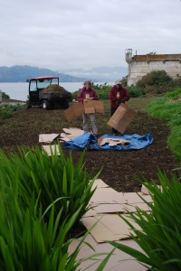 Beginning to lay down cardboard to smother the oxalis and weed seeds. A layer of mulch is then placed on top of the cardboard. Photo by Shelagh Fritz