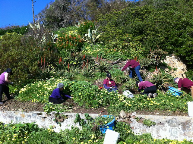 The volunteers weeding the slope of oxalis and mallow. Photo by Shelagh Fritz