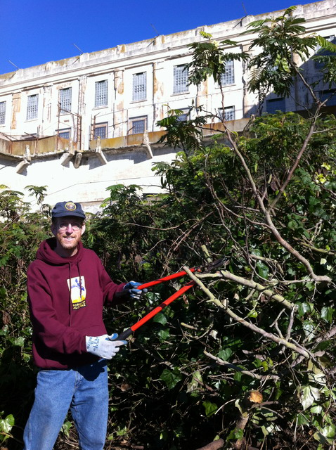 Dan tackles the overgrowth on his annual visit to Alcatraz. Photo by Shelagh Fritz