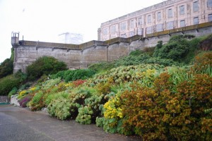 The 'stop and look at me' landscape in the Prisoner Gardens. Photo by Shelagh Fritz