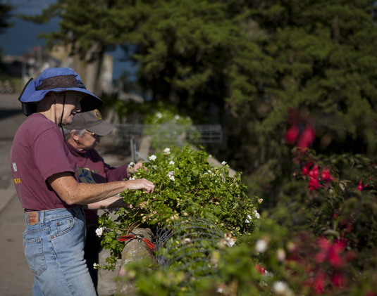 Volunteers stewarding the trough planter by removing yellow leaves and spent blossoms. Photo by Fergal Moran.