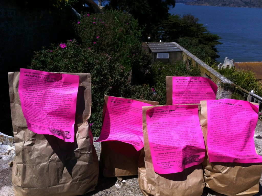 Bags of gladiolus. Photo by Shelagh Fritz