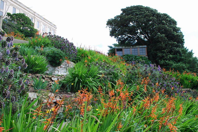 Orange Chasmanthe and blue Echium blooming in spring. Photo by Shelagh Fritz