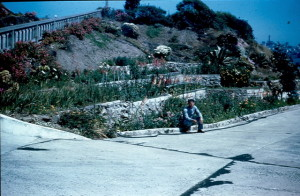 The terraces with Gladiolus tended by the Inmates in the 1940s. Photo courtesy of Joseph Simpson.