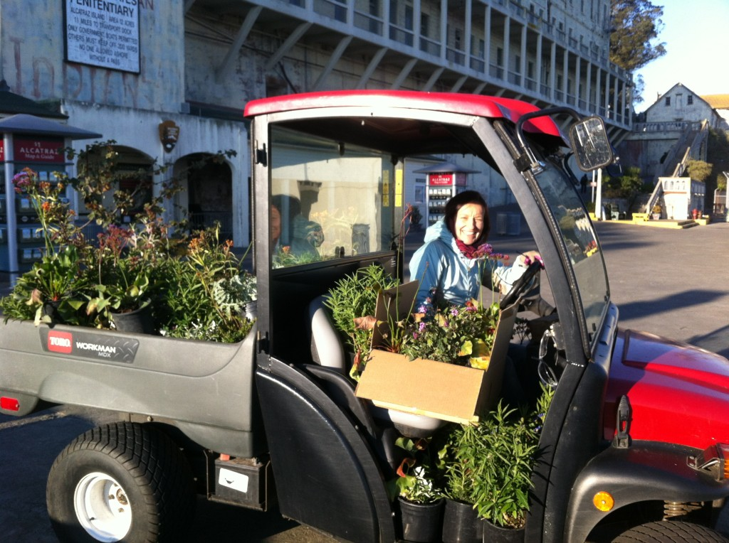 Karolina bringing our purchased plants from the Alcatraz dock to the work site. Photo by Shelagh Fritz