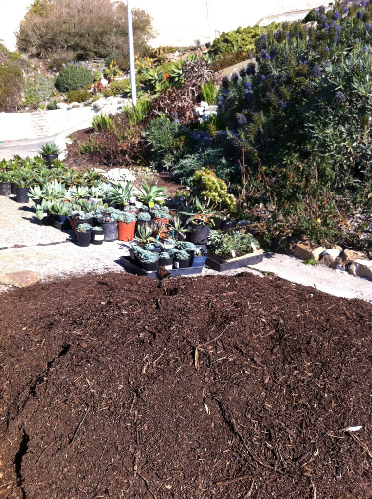 Fresh compost ready to be mixed into the beds.