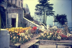 The historic photo showing red and yellow cutting flowers. Photo courtesy of J. Babyak