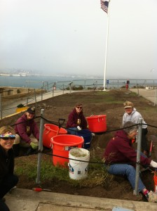 Volunteers working on the last patch of weeding oxalis. Photo by Shelagh Fritz