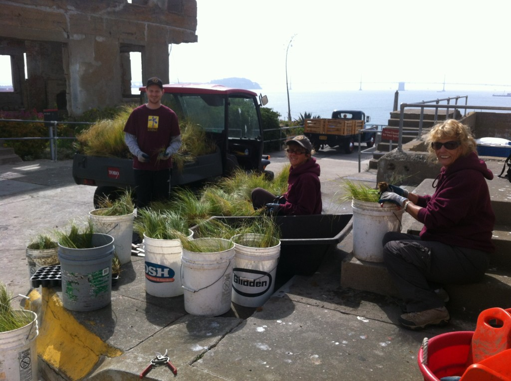Assembly line of volunteers teasing apart the root bound plugs. Photo by Shelagh Fritz