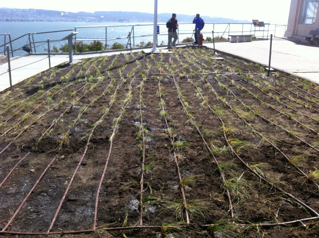 The newly planted lawn. Photo by Shelagh Fritz