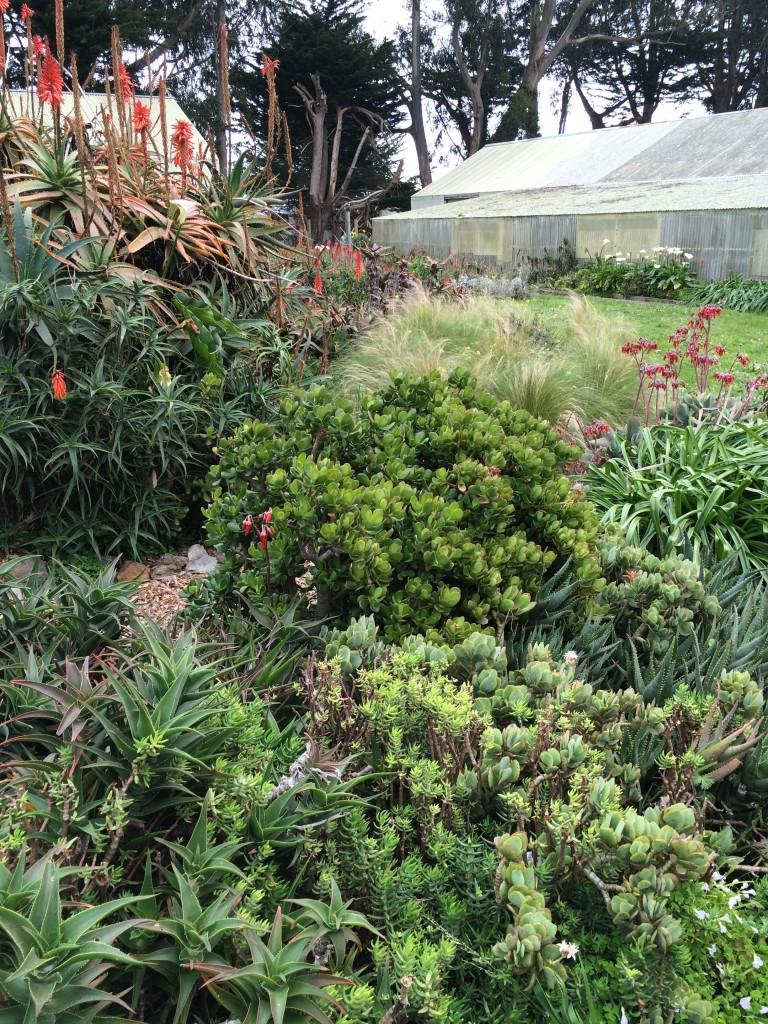Marin-Bolinas Botanical Garden started by Dr. Herman Schwartz.