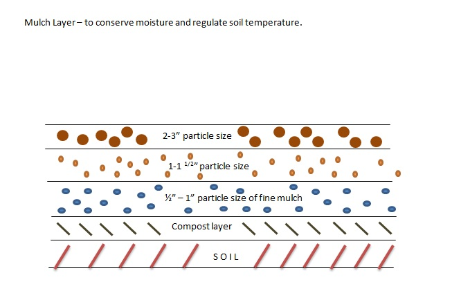 Mulch layer to conserve soil moisture and to moderate soil temperatures.